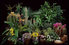 mixed-plants.jpg